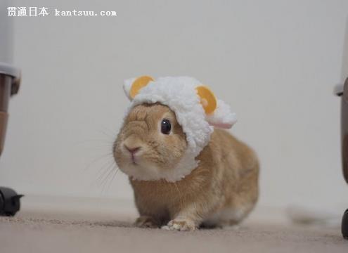 向上翘,前肢比后肢短,善于跳跃,跑得很快.宠物兔喜欢黏人,野兔