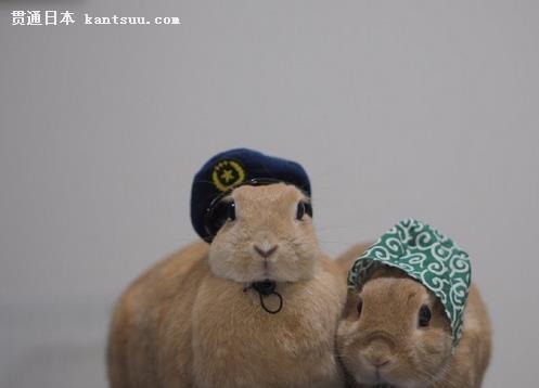 比如《疯狂动物城》中的兔朱迪