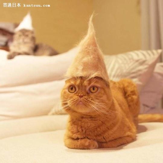 猫咪伤感背影手绘